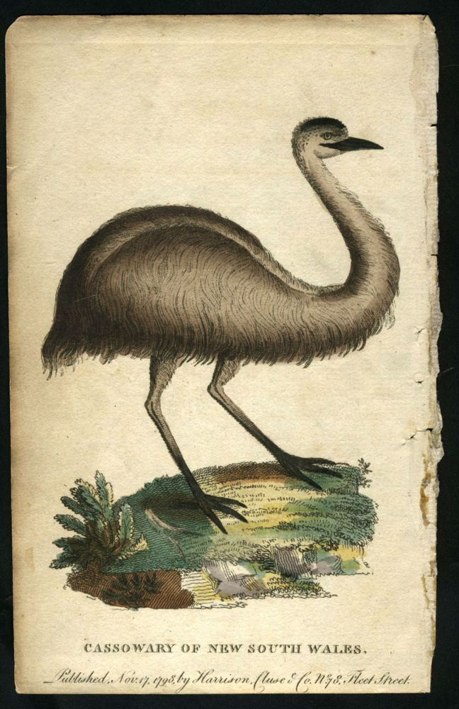 Cassowary of New South Wales. After George Barrington.