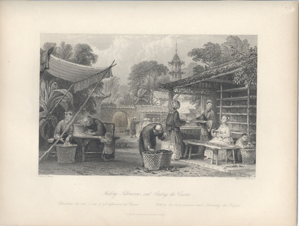 Feeding Silkworms, and Sorting the Cocoons. Silk, Thomas Allom.
