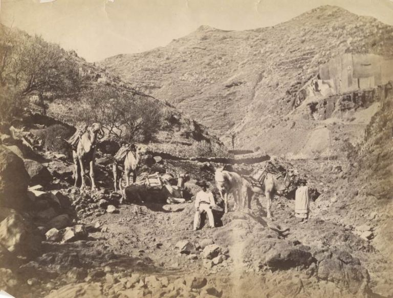 Photograph of Two Men in Foothills with Three Camels and a Horse.