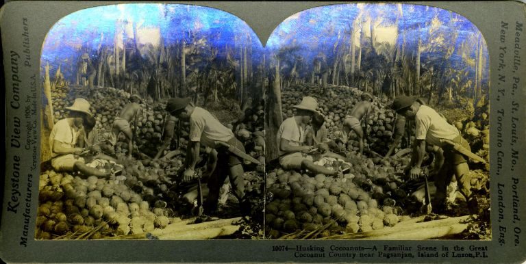 Stereoscopic view. Husking Cocoanuts ... in Luzon, P. I. Philippines.