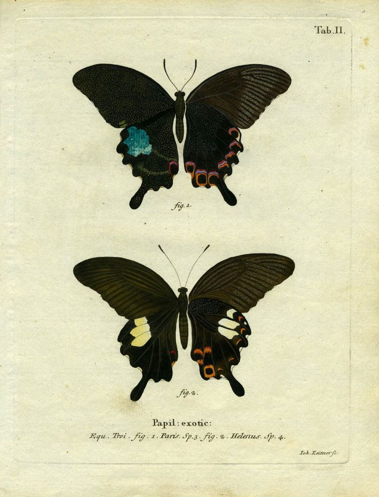 Papil. Exotic. ButterflyMoth Engraving, Joh Leitner.