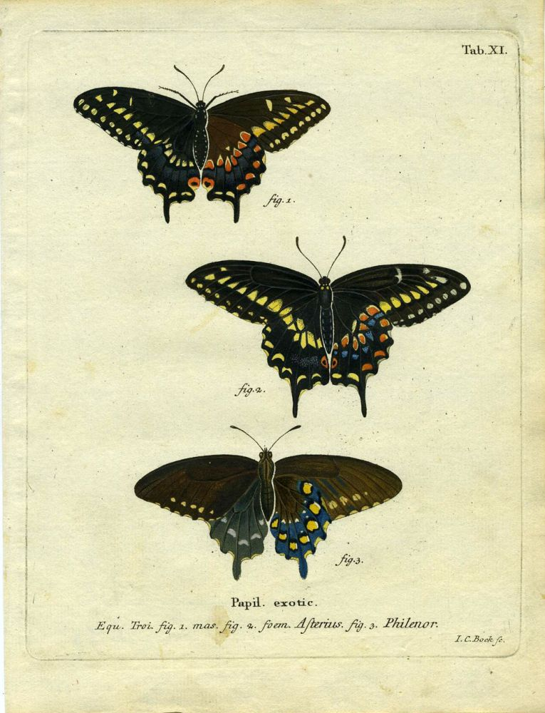 Papil. Exotic. ButterflyMoth Engraving, I. C. Bock.