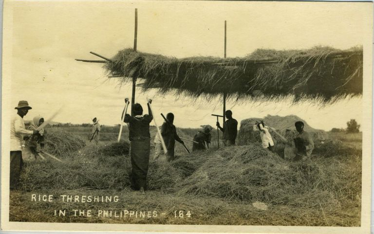 Rice Threshing in the Philippines. (numbered 184). Real photo postcard.