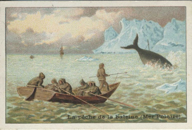 Chocolat Magniez-Baussart Amiens advertising card describing Whaling in the Polar Sea.