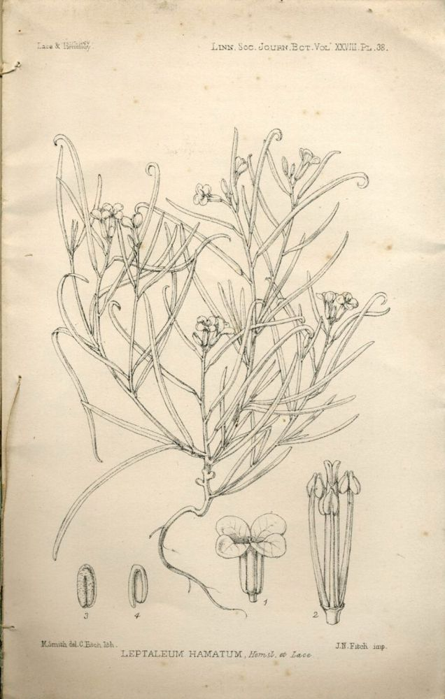 Report on Antarctic plants to Sir Joseph Hooker, in The Journal of the Linnean Society, Botany No. 194, 1891. J. H. Lace, Thomas Kirk.