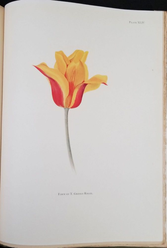 Notes on Tulip Species. W. R. Dykes, E. Katherine Dykes.