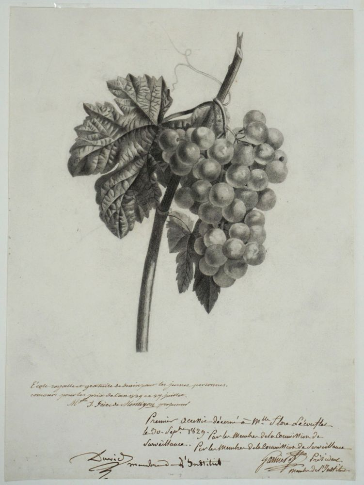 "Drawing of Grapes, awarded 1st prize for the year 1829 from the French drawing school ""École Royalle et Gratuite de Dessin pour les Jeunes Personnes"" Women, Art."