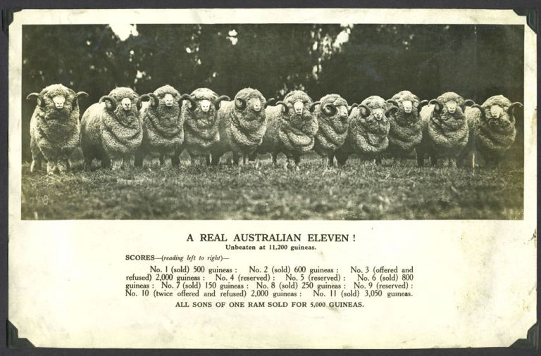 A real Australian eleven! …Unbeaten at 11,200 guineas. All sons of one ram sold for 5,000 guineas. Silvertone photograph.