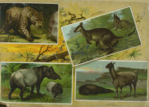 Arbuckles' Album of Illustrated Natural History.