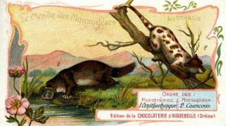 Le Monde des Mammiferes, Australie. (Platypus and Spotted Cuscus). Advertising card....