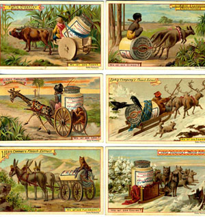 Set of 6 cards, including kangaroo and dingo. Kangaroo, Liebig Advertising cards