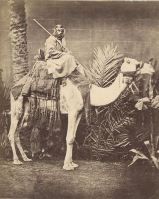 Photograph of Bedouin on Camel, Suez, 1876