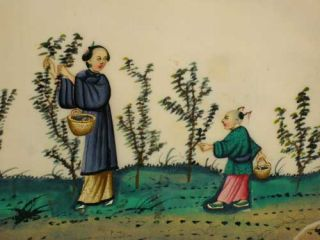Album of 19th century Chinese Pith Paintings illustrating the Tea Industry.