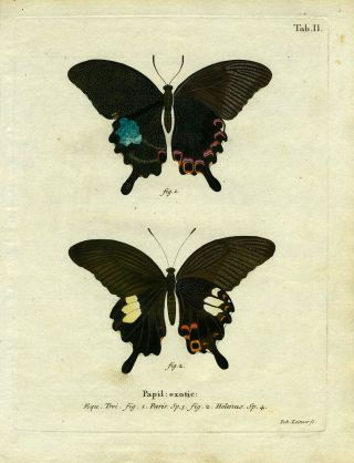 Papil. Exotic. ButterflyMoth Engraving, Joh Leitner