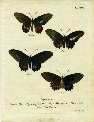 Pap. Exotic. ButterflyMoth Engraving, I. C. Bock