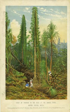 Group of Pandanus in the Delta of the Zambesi River, Eastern Tropical Africa. Engraving. Thomas...