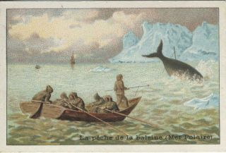 Chocolat Magniez-Baussart Amiens advertising card describing Whaling in the Polar Sea