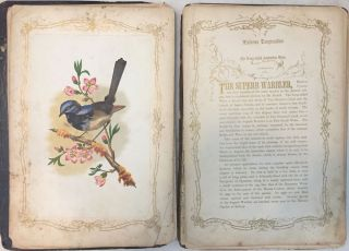 The Book of Exotic Birds. A series or Richly Colored (sic) Plates Accompanied by Descriptions.