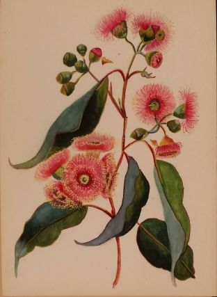 "Watercolor album of Australian Flowers. Australian; ""L. R."""