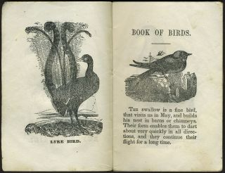 Book about Birds.