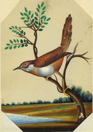 Bird Painting from India on Mica.