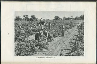 A Survey of the Grape Industry of Western Australia.