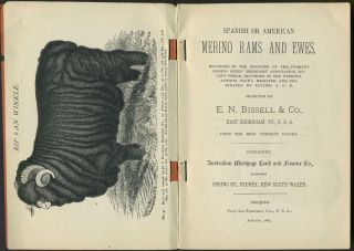 Spanish or American Merino Rams and Ewes ... Selected by E. N. Bissell & Co. ... from the Best...