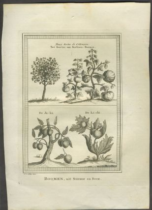 Boomen, uit Nieuhof en Boim. Copper engraving. China, Lychee, Cotton