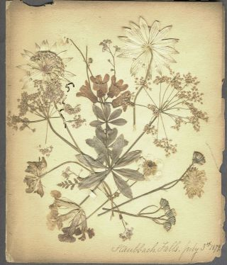 Pressed Dried Flowers of Italy and Switzerland. Album. Botanicals, Europe