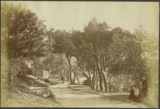 Walk, Outer Domain. Sydney. Albumen Photograph. N. King