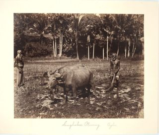 Bullock Cart, Ceylon [with] Singhalese Plowing, Ceylon. 2 Albumen photographs. Sri Lanka,...