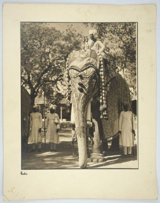 Maharaja Elephants in Ceremonial Dress. 3 Silver gelatin photographs.