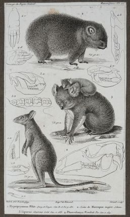 'The Animal Kingdom, Arranged According to its Organization, Serving as a Foundation for the Natural History of Animals, and an Introduction to Comparative Anatomy'. Plates contained in an album.