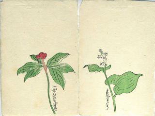 Japanese hand printed and colored note cards with original wrapper.