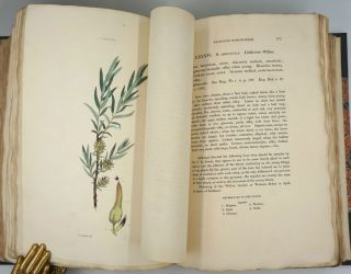 Salictum Woburnense: or, a Catalogue of Willows Indigenous and Foreign in the Collection of the Duke of Bedford at Woburn Abbey.