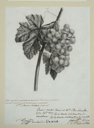 "Drawing of Grapes, awarded 1st prize for the year 1829 from the French drawing school ""École Royalle et Gratuite de Dessin pour les Jeunes Personnes"""