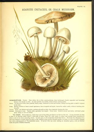 Mushrooms of America; Edible and Poisonous.
