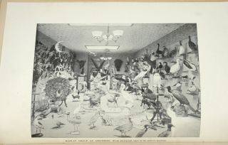 Methods in the Art of Taxidermy.