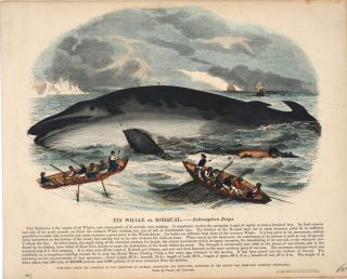 Fine collection of 143 items related to whaling & whales, including early engravings; an early...