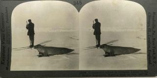 Commander Adrien de Gerlache, on skies hunting seals on South Polar Pack. Adrien de Gerlache de...